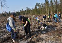 """Dzięki Grupie PGE powstają kolejne """"lasy pełne energii"""""""