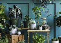 KRISPOL radzi: zadbaj o rośliny w swoim domu